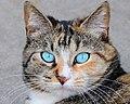 I Iz Cat (96804319).jpeg