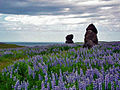 Iceland sculptures with lupines.jpg