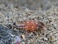 Isopod (24463914608).jpg