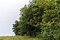 Izvoare – Risipeni, monument al naturii img 026.jpg