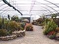 Jardin botanique - Planète pelargonium 1.jpg