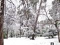 Jardines del Buen Retiro (Madrid) 24.jpg