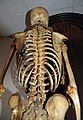 John Horwood's skeleton - back.jpg