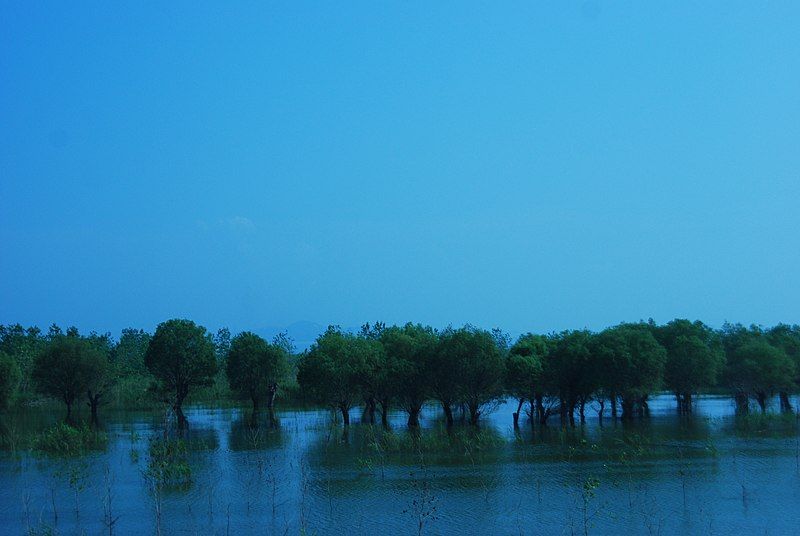 File:Joshan Trees in DongTing Lake - panoramio.jpg