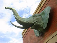 Jumbo echo - Tufts University - IMG 0967.JPG