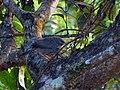 Jungle Babbler - Mugilu Homestay.jpg