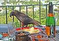 Kaka (Nestor meridionalis) -Wellington -NZ-8a.jpg
