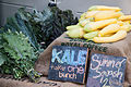 Kale and Cucurbita pepo Summer Squash.jpg