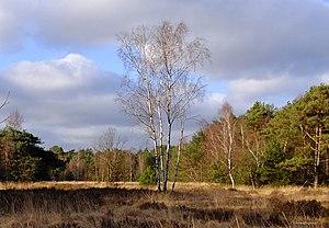 De Zoom – Kalmthoutse Heide - Kalmthoutse Heide in February