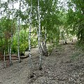 Kamyshinsky District, Volgograd Oblast, Russia - panoramio (294).jpg