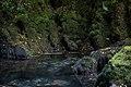 Kanjon Prače 6.jpg