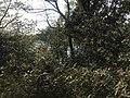 Kasuya Research Forest of Kyushu University 15.jpg