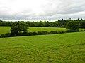 Kemphill Moor Copse - geograph.org.uk - 530632.jpg