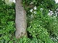 Kevelaer-Winnekendonk NSG Fleuthbenden PM18-08.jpg