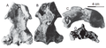 Khunnuchelys lophorhothon skull.png