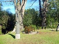 Kirstenbosch National Botanical Garden by ArmAg (9).jpg