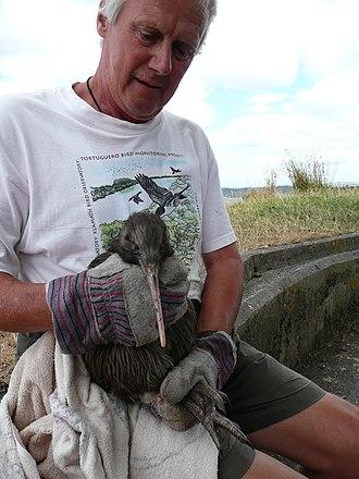 Kiwi (people) - A Kiwi holding a kiwi