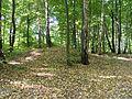 Kleczanow - cmentarzysko ciałopalne z VIII-X w.jpg