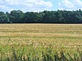Kleinbeeren -Gemaehtes Feld (Mown Field) - geo.hlipp.de - 41178.jpg