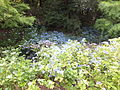 Kobe Municipal Arboretum in 2013-6-22 No,32.JPG