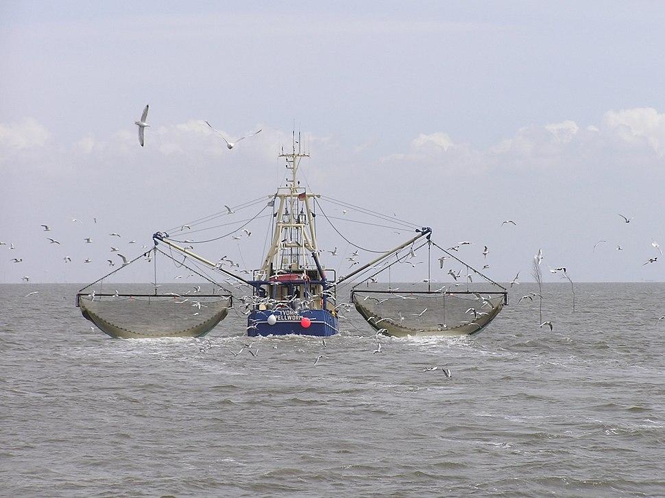 Krabbenkutter Ivonne Pellworm P5242390jm