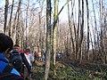 Krakovski gozd (2).jpg