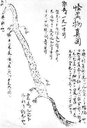 Inugami - A depiction of an inugami from Oka Kumaomi's Chiriyahokori