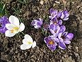 Květ 9913.jpg