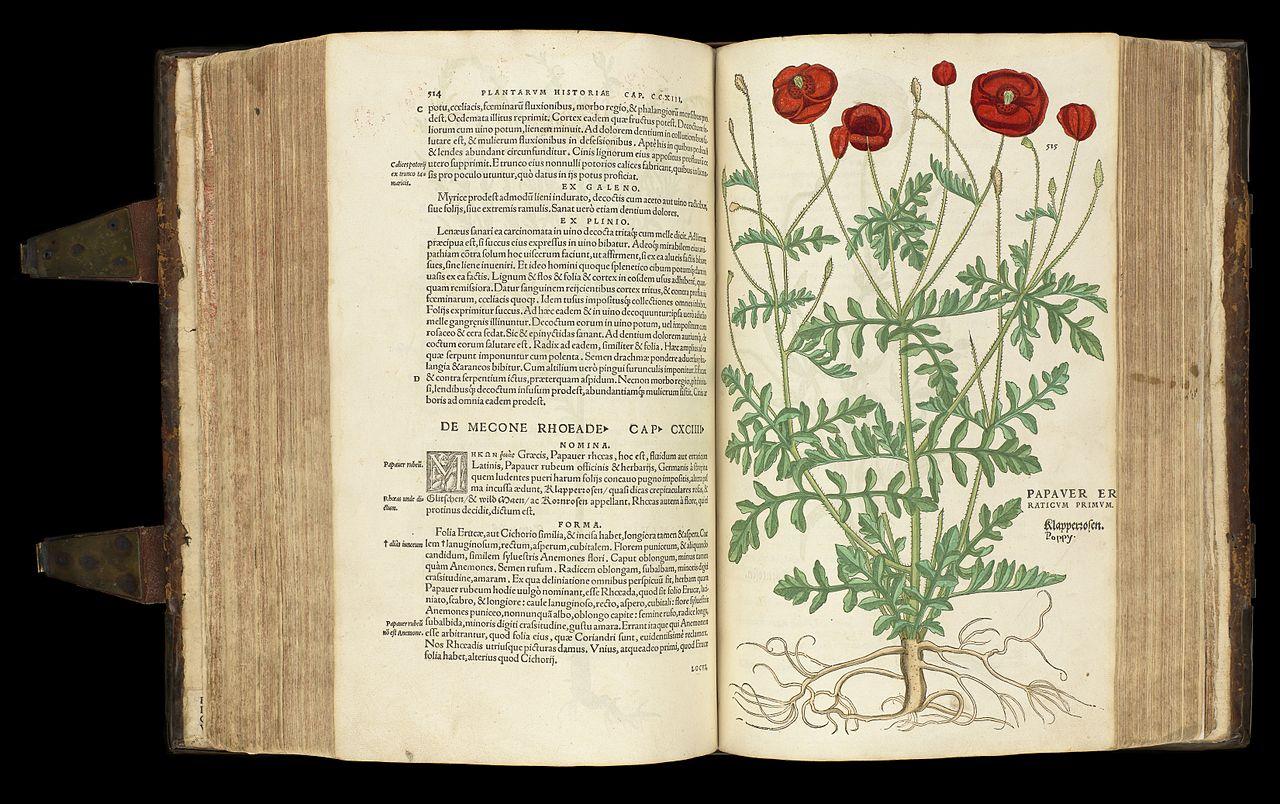 L0051248 L. Fuchs; De historia stirpivm commentarii