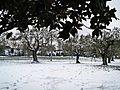 La Castellina-01,02,2012-giardino innevato.jpg