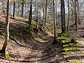 La Neuville-en-Hez (60), chemin forestier de Froidmont - GR 124 1.jpg