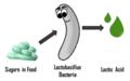 Lactic acid cartoon representation.png