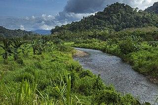 Eastern Java–Bali rain forests