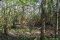 Landschaftsschutzgebiet Röderhofer Teiche und Egenstedter Forst - Sonnenberg-Wäldchen (1).jpg