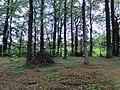 Landschaftsschutzgebiet Strothheide Melle Datei 14.jpg