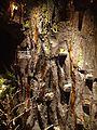 Las bursztynowy.jpg