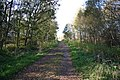 Laughton Forest - geograph.org.uk - 1024203.jpg