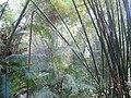 Lawachara National Park Srimongol Sylhet Bangladesh 10.JPG