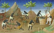 Pepper harvested for the European trader, from a manuscript Livre des merveilles de Marco Polo (The book of the wonders of Marco Polo)