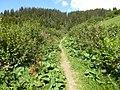 Le sentier du chard du beurre - panoramio (1).jpg