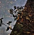 Leaves Reflected Through Plastic.jpg