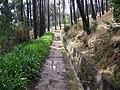 Levada walk near Camacha.jpg