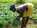 Liberia, Africa - panoramio (165).jpg