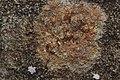 Lichen (41004255232).jpg