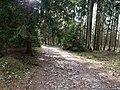 Limes-Path near Roßkopf.jpg
