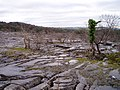 Limestone pavement, Clawthorpe Fell - geograph.org.uk - 95177.jpg