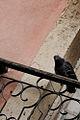 Lisboa - AlfamaPaisagemUrbana DBD DSC0840 2 (12309257236).jpg