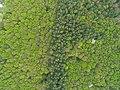 Lisohryvnivskyi Forestry Preserve 02.jpg