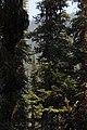 Little Yoho Valley IMG 4865.JPG