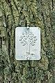 Livstræ.jpg